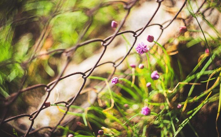 flores-alambre